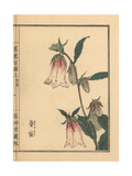 Spotted Bellflower, Campanula Punctata Giclee Print by Bairei Kono