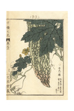 Goya or Bitter Gourd, Momordica Charantia Giclée-Druck von Bairei Kono