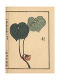Japanese Wild Ginger, Asarum Caulescens Maxim Giclée-Druck von Bairei Kono