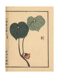 Japanese Wild Ginger, Asarum Caulescens Maxim Giclee Print by Bairei Kono