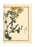 Kangiku or Winter Chrysanthemum, Chrysanthemum Indicum Giclee Print by Bairei Kono