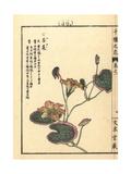 Fringed Waterlily, Nymphoides Peltata Giclee Print by Bairei Kono