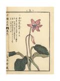 Katakuri Lily, Erythronium Japonicum Giclee Print by Bairei Kono