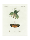 Leaf Mantis, Lantern Fly, and European Lantern Fly Giclee Print