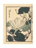 Bottle Gourd Flower, Lagenaria Siceraria Giclee Print by Bairei Kono