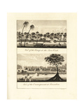 View of the Camps at Java Creek and Jerusalem, Surinam Giclee Print by John Gabriel Stedman