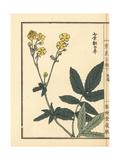 Honbakusou, Potentilla Discolor Bunge Giclee Print by Bairei Kono