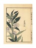 Housenka or Garden Balsam, Impatiens Balsamina Giclee Print by Bairei Kono