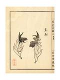 Japanese Ginger, Zingiber Mioga Giclee Print by Bairei Kono