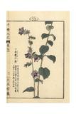 Lady Bells, Adenophora Stricta Giclee Print by Bairei Kono