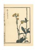 Watana or Japanese Fleabane, Conyza Japonica Giclee Print by Bairei Kono