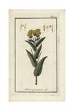 German Inula, Inula Germanica Giclee Print