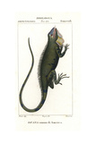 Green Iguana or Common Iguana, Iguana Iguana Giclee Print by Pierre Turpin