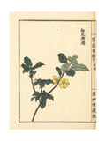 Baika Tsutsuji or Yellow Azalea, Rhododendron Species Giclee Print by Bairei Kono