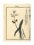 Omodaka or Threeleaf Arrowhead, Sagittaria Trifolia Giclee Print by Bairei Kono