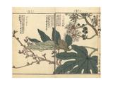 Japanese Castor Oil Plant, Fatsia Japonica, and Kanzakura Cherry Giclee Print by Bairei Kono