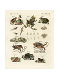 Toads and Frogs Giclee Print
