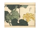 Pumpkin Flower, Cucurbita Pepo Giclee Print by Bairei Kono