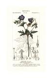Meadow Cranesbill, Geranium Pratense Giclee Print by Pierre Turpin