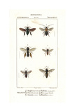 Orchid Bee, Antenna Bee, Cuckoo Bee, Mining Bee, and Sand Wasp Giclee Print by Pierre Turpin