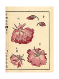 China Rose, Rosa Chinensis Giclee Print by Bairei Kono