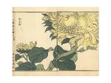 Sunflower, Helianthus Annuus Giclee Print by Bairei Kono