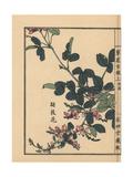 Koshika or Hagi, Japanese Clover, Lespedeza Bicolor Japonica Giclee Print by Bairei Kono