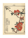 Flowering Quince, Chaenomeles Speciosa Giclee Print by Bairei Kono