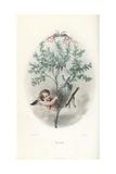 Cupid Hiding in a Myrtle Bush, Myrtus Communis Giclee Print by Jean Ignace Grandville