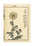 Edible Chrysanthemum, Chrysanthemum Coronarium Giclee Print by Bairei Kono