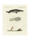 Duck-Billed Platypus and Meadow Jumping Mouse Giclee Print