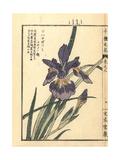 Hanagatsumi Iris, Iris Species Giclee Print by Bairei Kono
