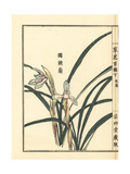 Dokutoran, Shuran or Noble Orchid, Cymbidium Goeringii Giclee Print by Bairei Kono