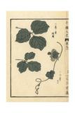 Kudzu, Pueraria Lobata Giclée-Druck von Bairei Kono