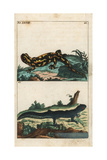 Fire Salamander and Common Newt Giclee Print