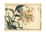 Tametomo Yuri or Golden Rayed Lily, Lilium Auratum Platyphyllum Giclée-Druck von Bairei Kono