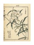White Carnation, Dianthus Superbus Giclee Print by Bairei Kono