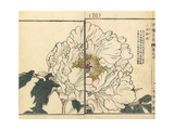 White Peony, Paeonia Species Giclée-Druck von Bairei Kono