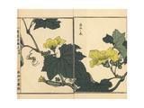 Hechima or Sponge Cucumber Flower, Luffa Cylindrica Giclee Print by Bairei Kono