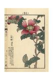 Christmas Camellia, Camellia Sasanqua Giclee Print by Bairei Kono