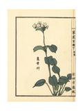 Tachi Kamebasou or Trigonotis Guilielmi Giclee Print by Bairei Kono