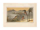 Crocodile and Pygmies from the House of the Pygmies, Pompeii Giclee Print