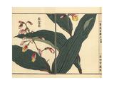Kumataka or Kokei Ran Orchid, Oreorchis Patens Giclee Print by Bairei Kono