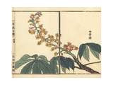 Tochinoki or Japanese Horse Chestnut, Aesculus Turbinata Giclee Print by Bairei Kono