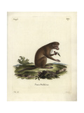 Simia Basiliscus Giclee Print by J. Ihle
