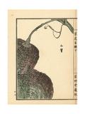 Kabocha or Pumpkin Fruit, Cucurbita Pepo Giclee Print by Bairei Kono