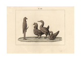 A Turkey, Goose and Duck Worship a Priapus Hermes Giclee Print by A. Delvaux