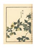 Yamabuki or Kerria Japonica Giclee Print by Bairei Kono