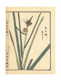 Branched Bur-Reed, Sparganium Erectum Giclee Print by Bairei Kono