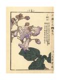 Empress Tree, Paulownia Tomentosa Giclee Print by Bairei Kono